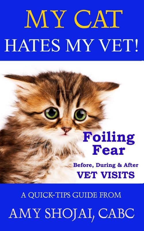 My Cat Hates My Vet! Foiling Fear Before, During & After Vet Visits